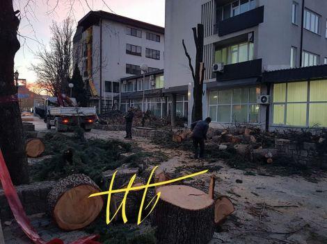 seca-na-drvja