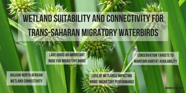Migratory Birds, Wetlands.jpg