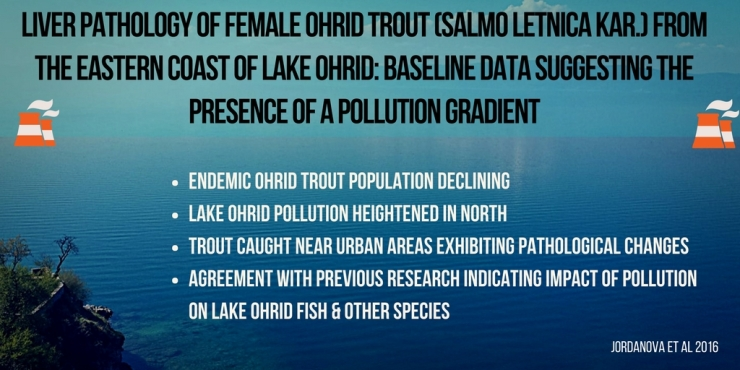Ohrid Trout Pollution