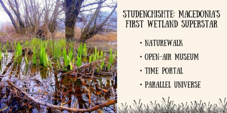 Wetland Superstar